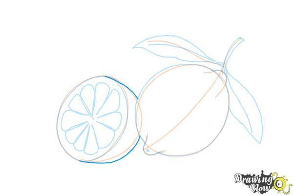 How to Draw a Lemon - Step 11