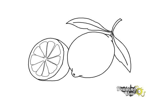 How to Draw a Lemon - Step 12