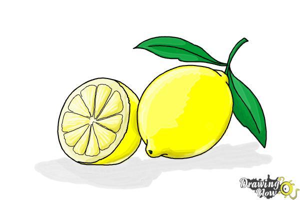 How to Draw a Lemon - Step 13