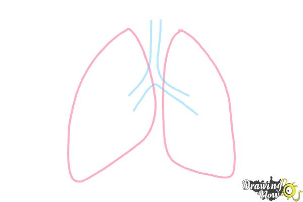 how to draw lungs drawingnow simple stomach diagram how to draw lungs step 2