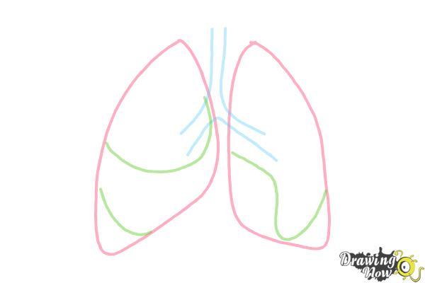 How to Draw Lungs - Step 3