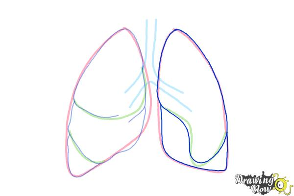 How to Draw Lungs - Step 5