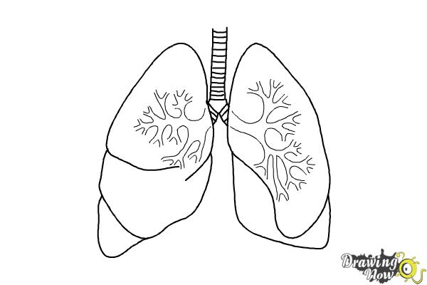 How to draw lungs drawingnow how to draw lungs step 9 ccuart Images
