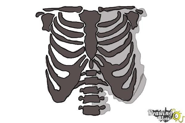 How to Draw a Rib Cage - Step 10
