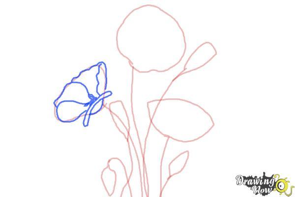 How to Draw a Poppy - Step 4