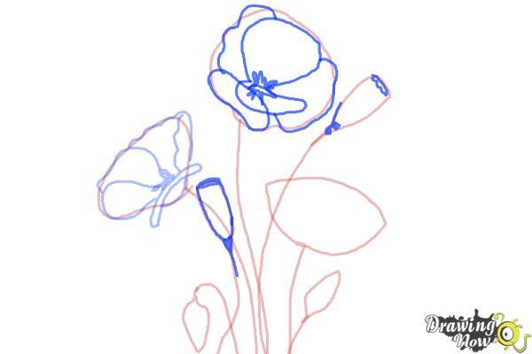 How to Draw a Poppy - Step 5
