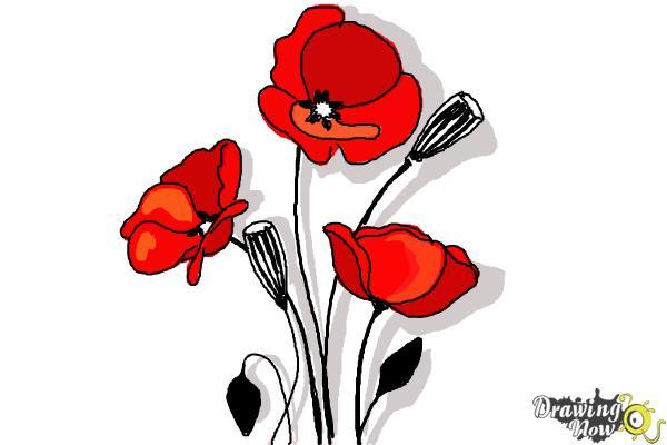 How To Draw A Poppy Drawingnow