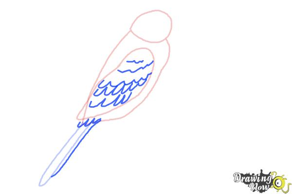 How to Draw a Parakeet - Step 4