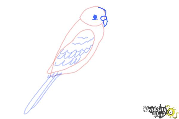 How to Draw a Parakeet - Step 5