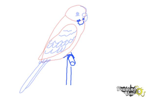 How to Draw a Parakeet - Step 6