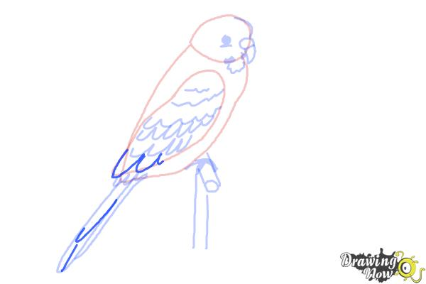 How to Draw a Parakeet - Step 7