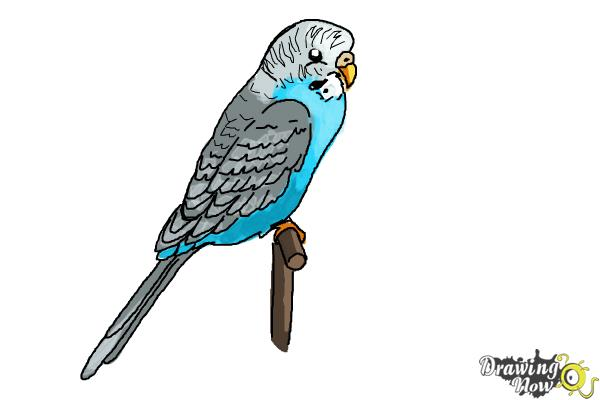 How to Draw a Parakeet - Step 9
