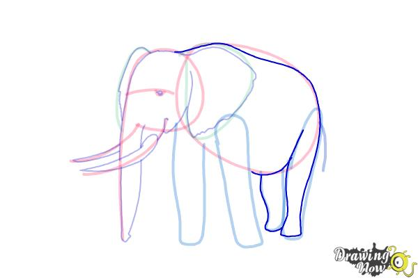 How to Draw Elephants - Step 12