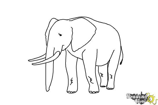 How to Draw Elephants - Step 15
