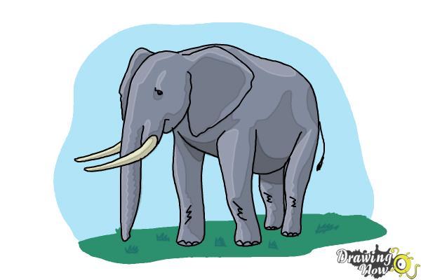 How to Draw Elephants - Step 16