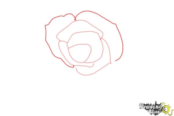 How to Draw an Open Rose - Step 3