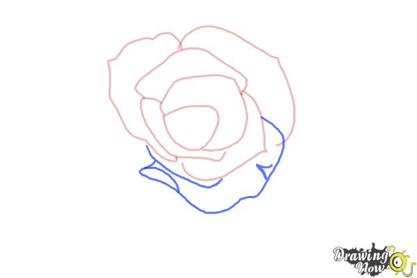 How to Draw an Open Rose - Step 4