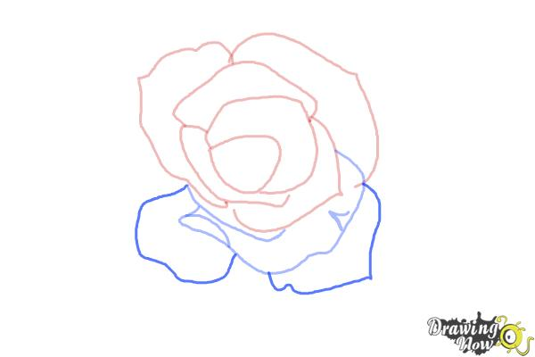How to Draw an Open Rose - Step 5