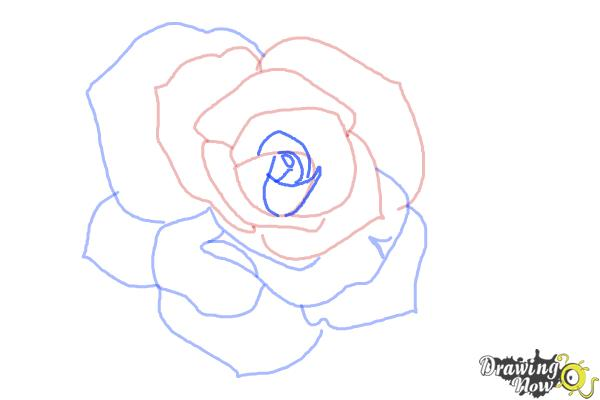 How to Draw an Open Rose - Step 7