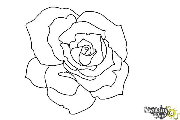 How to draw an open rose step 8