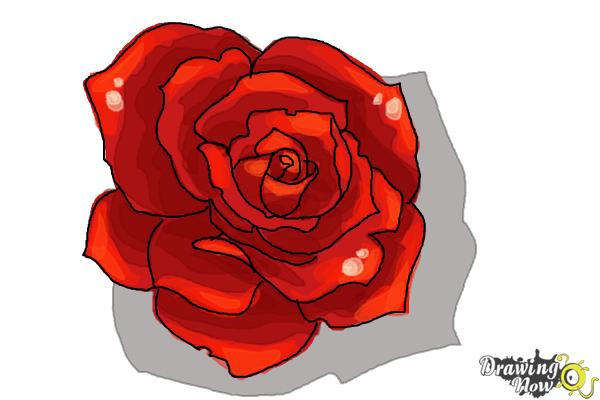 How to Draw an Open Rose - Step 9