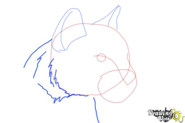 How to Draw a Mountain Lion - Step 5