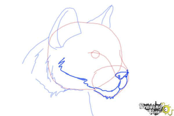 How to Draw a Mountain Lion - Step 6