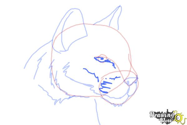 How to Draw a Mountain Lion - Step 7