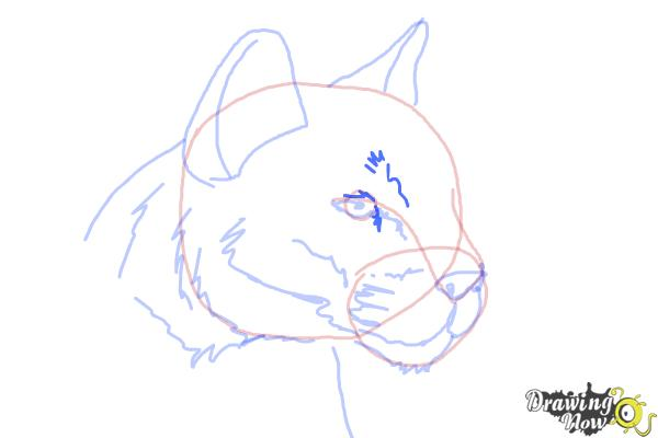 How to Draw a Mountain Lion - Step 8