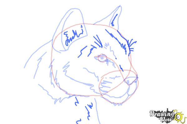 How to Draw a Mountain Lion - Step 9