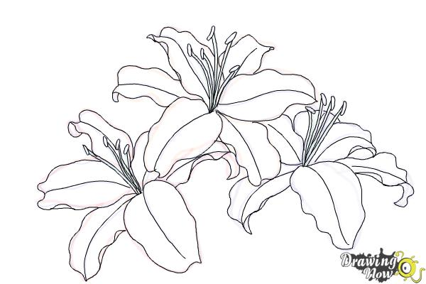 How to Draw Lillies - Step 10