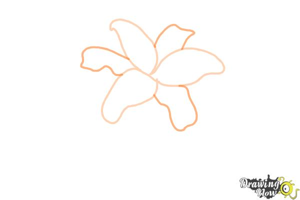 How to Draw Lillies - Step 2