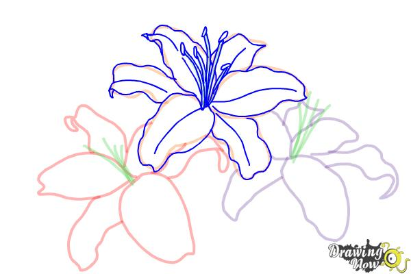How to Draw Lillies - Step 7