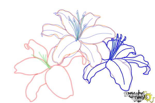 How to Draw Lillies - Step 8