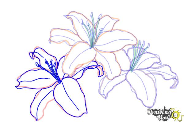 How to Draw Lillies - Step 9