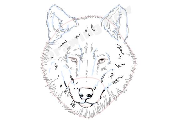 how to draw a wolf face step 10