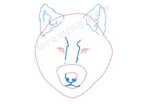 How to draw a wolf face drawingnow how to draw a wolf face step 4 ccuart Gallery