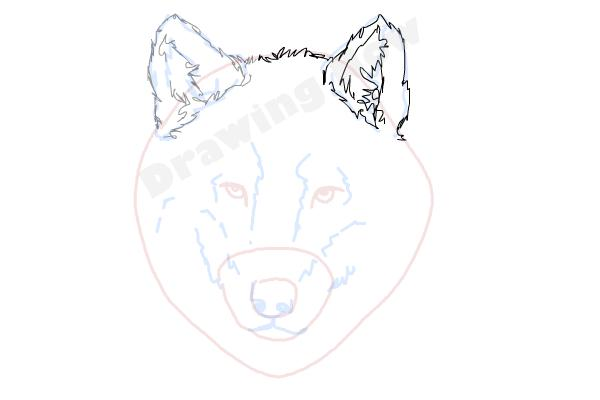 How to draw a wolf face drawingnow how to draw a wolf face step 7 ccuart Gallery