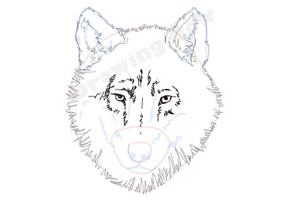 How To Draw A Wolf Face Drawingnow