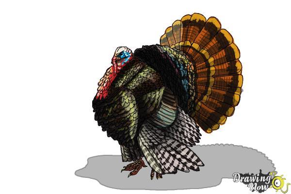 How to Draw a Turkey Step by Step - Step 11