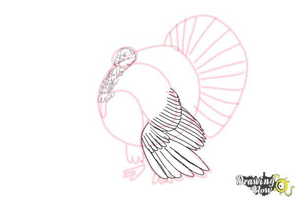 How to Draw a Turkey Step by Step - Step 6