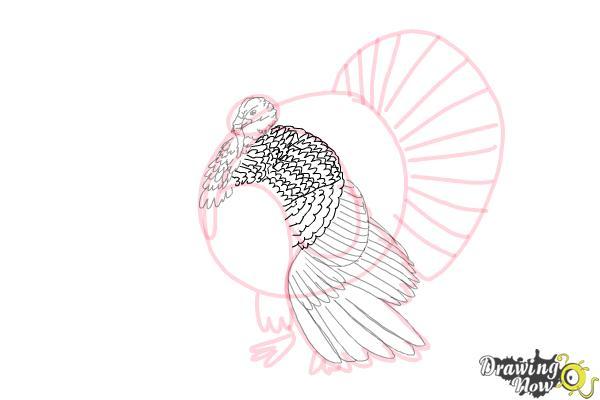 How to Draw a Turkey Step by Step - Step 7