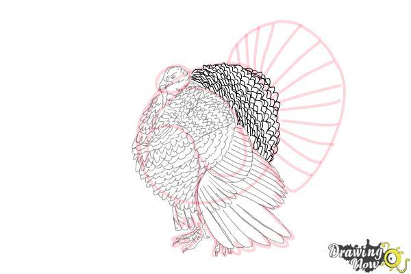 How to Draw a Turkey Step by Step - Step 9
