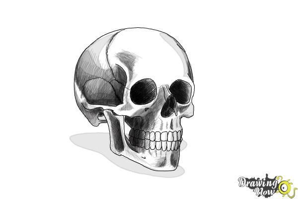 How to Draw a Skull Step by Step - Step 10