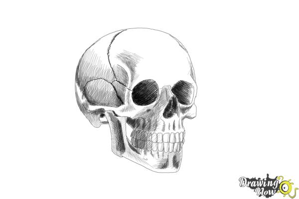 How to Draw a Skull Step by Step - Step 9