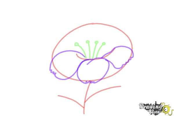 How to Draw a Flower Step by Step - Step 3
