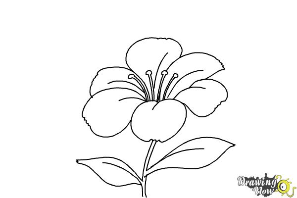 How to draw a flower step by step step 6