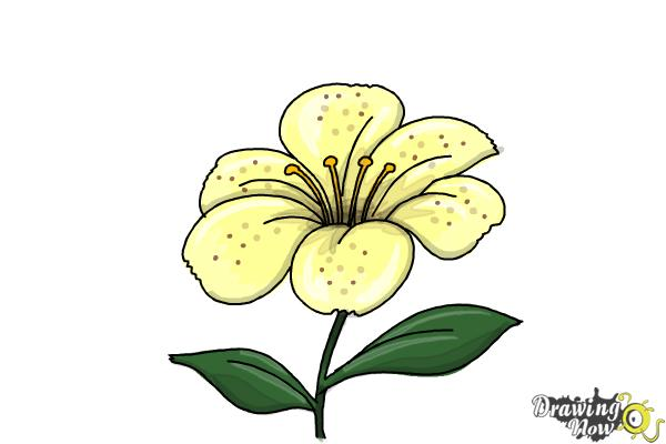 How To Draw A Flower Step By Step Drawingnow