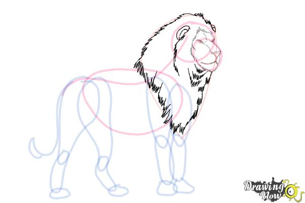 how to draw a lion step by step drawingnow