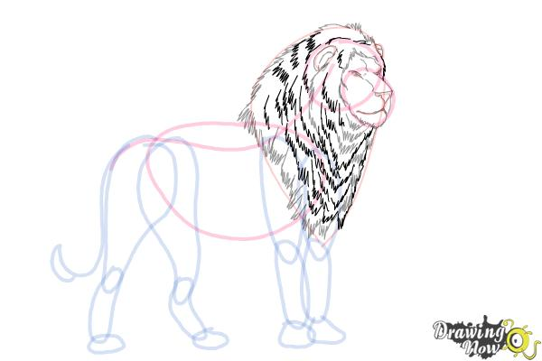 How to Draw a Lion Step by Step - Step 8